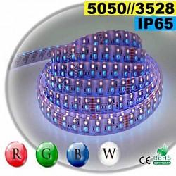 Strip LEDs RGB-W IP65 - Double assemblage de LEDs 5050 et 3528 5 mètres