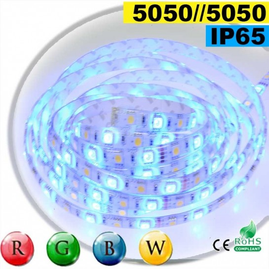 Strip Led RGB-WW IP65 60leds/m SMD 5050 rouleau de 30 mètres