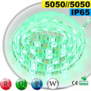 Strip Led RGB-W IP65 60leds/m SMD 5050 5m