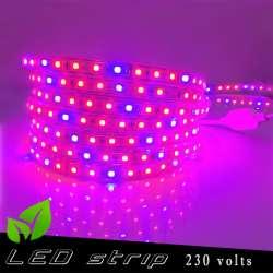 Strip LED Horticole 230 volts - LED rouge et bleue ratio 3 / 1