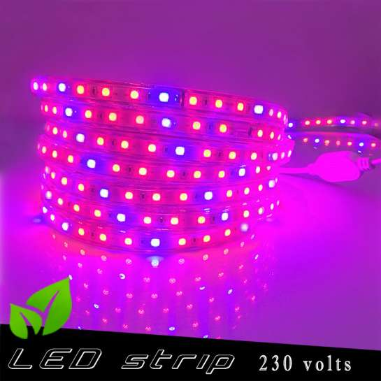 Strip LED Horticole 230 volts - LED rouge et bleue ratio 5 / 1