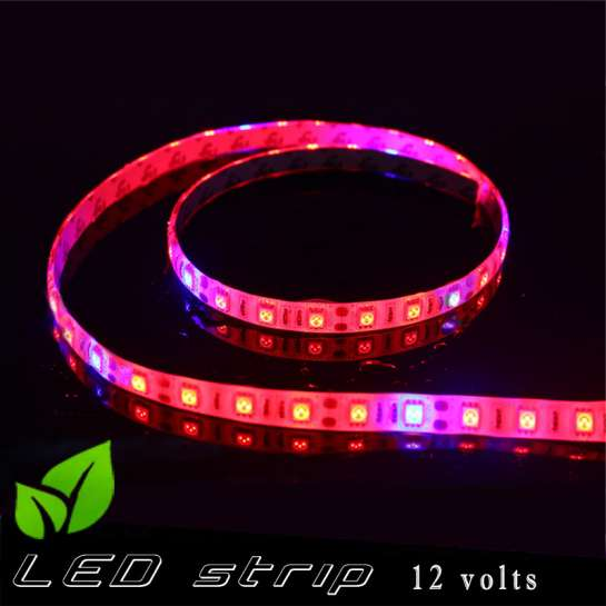 Strip LED horticole 12 volts -IP65 avec LED rouge et bleue ratio 5 / 1 -rouleau de 5 mètres