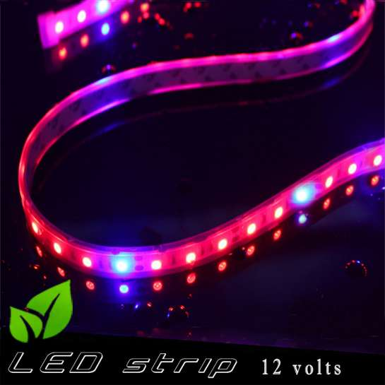 Strip LED horticole 12 volts -IP67 avec LED rouge et bleue ratio 5 / 1 -rouleau de 5 mètres