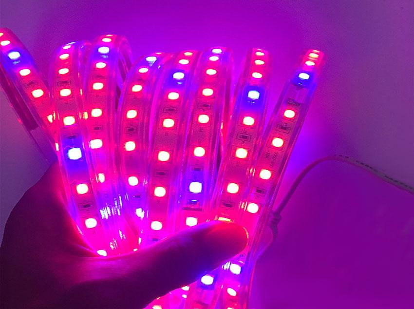Rouleau de strip LED horticole start