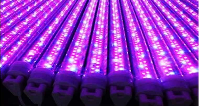 Tube LED Horticole