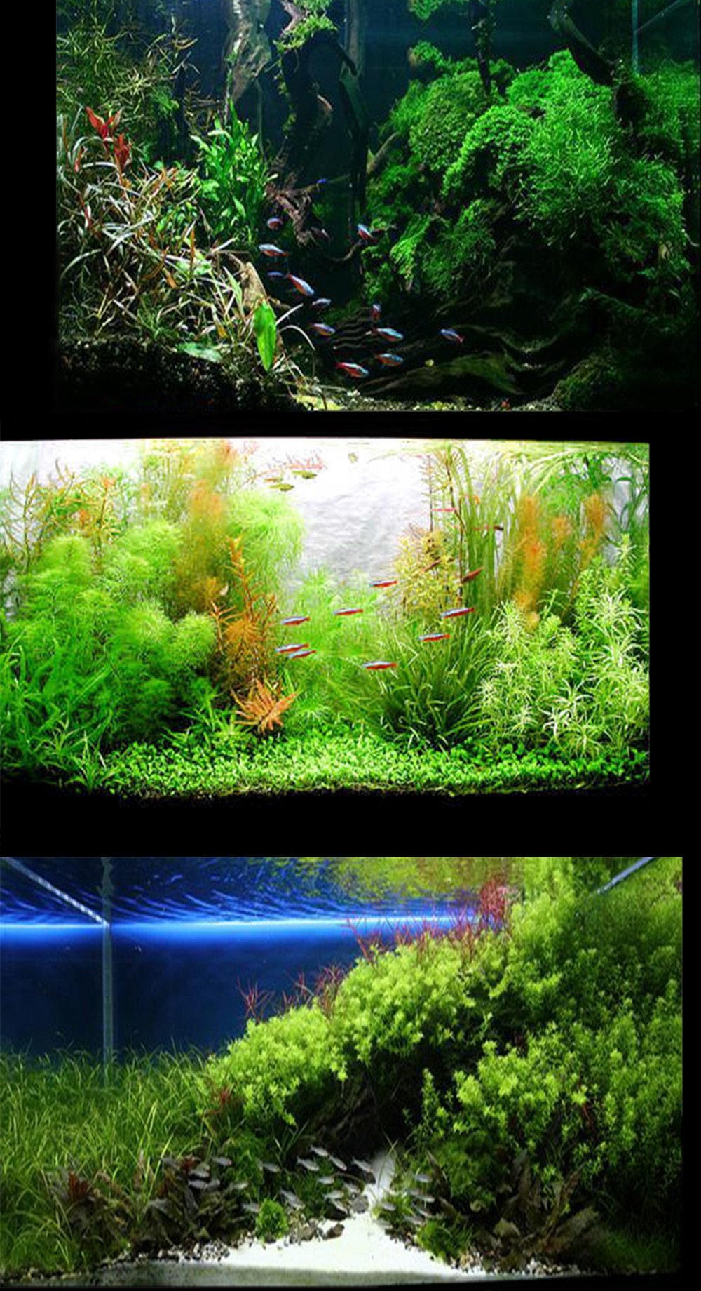 Tube LED T8 couleur ultra-violet aquarium