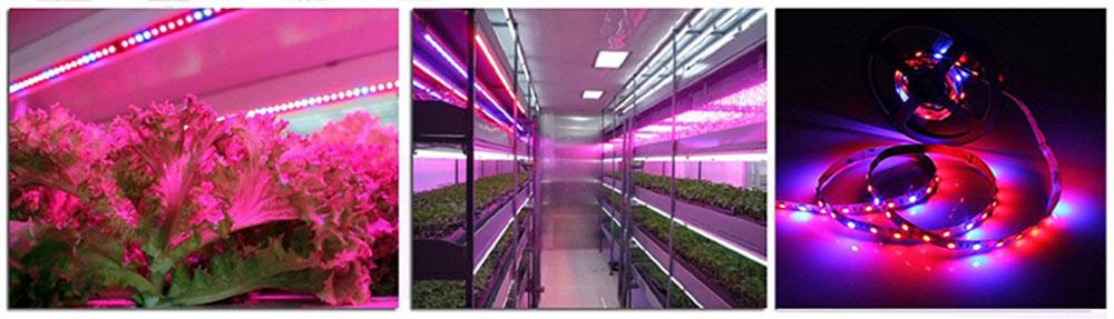 étagère avec éclairage LED horticole